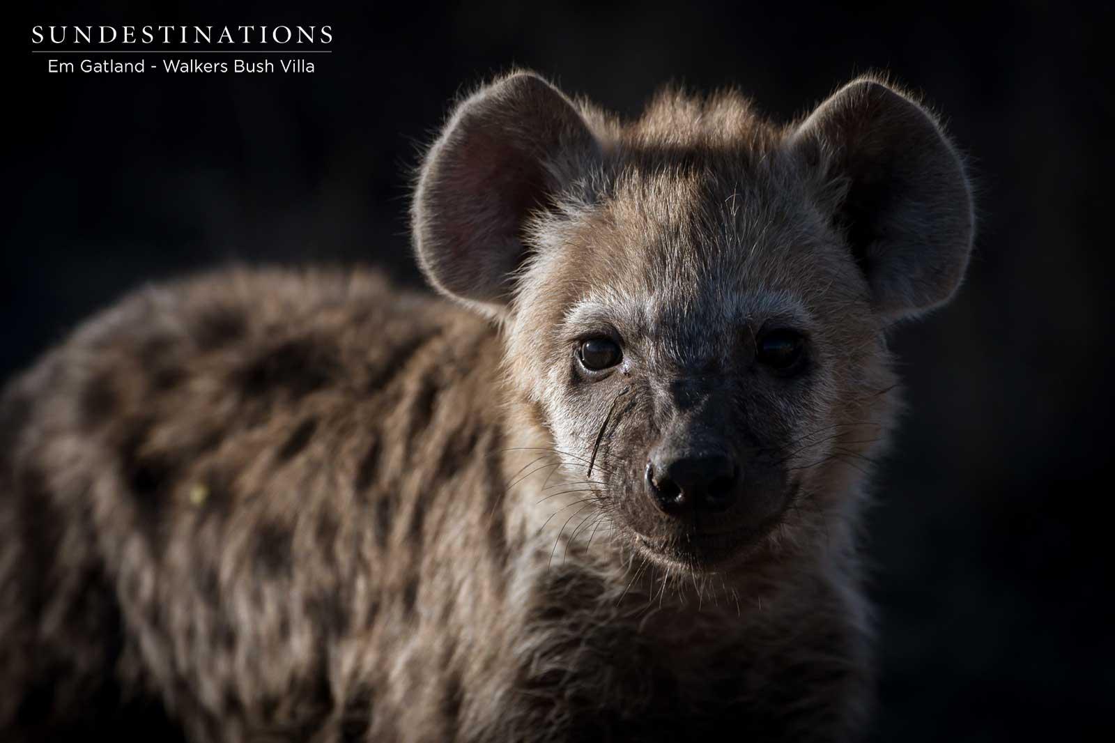 Walkers Bush Villa Hyena