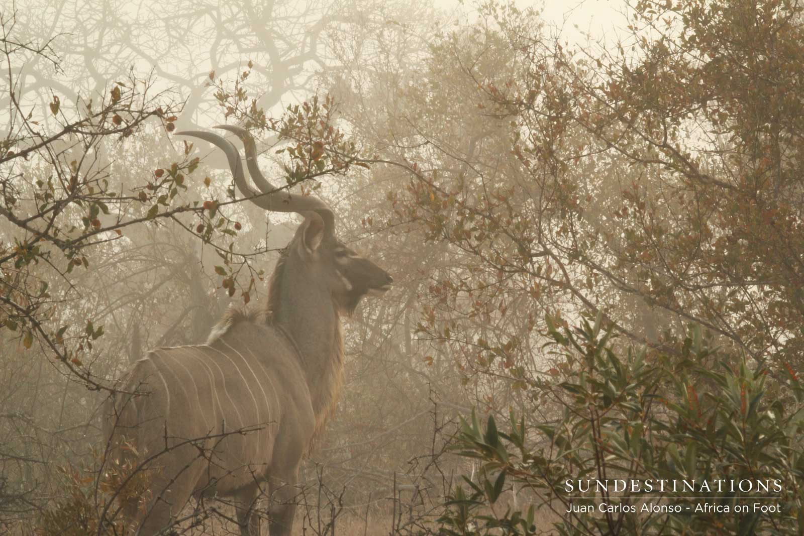Africa on Foot Kudu