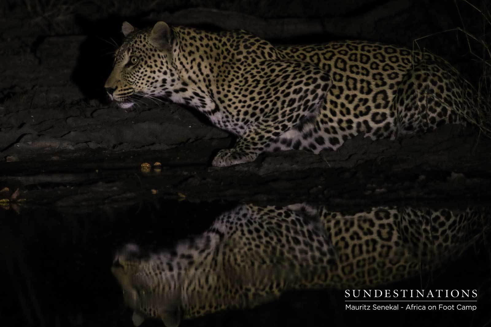 Africa on Foot Leopards