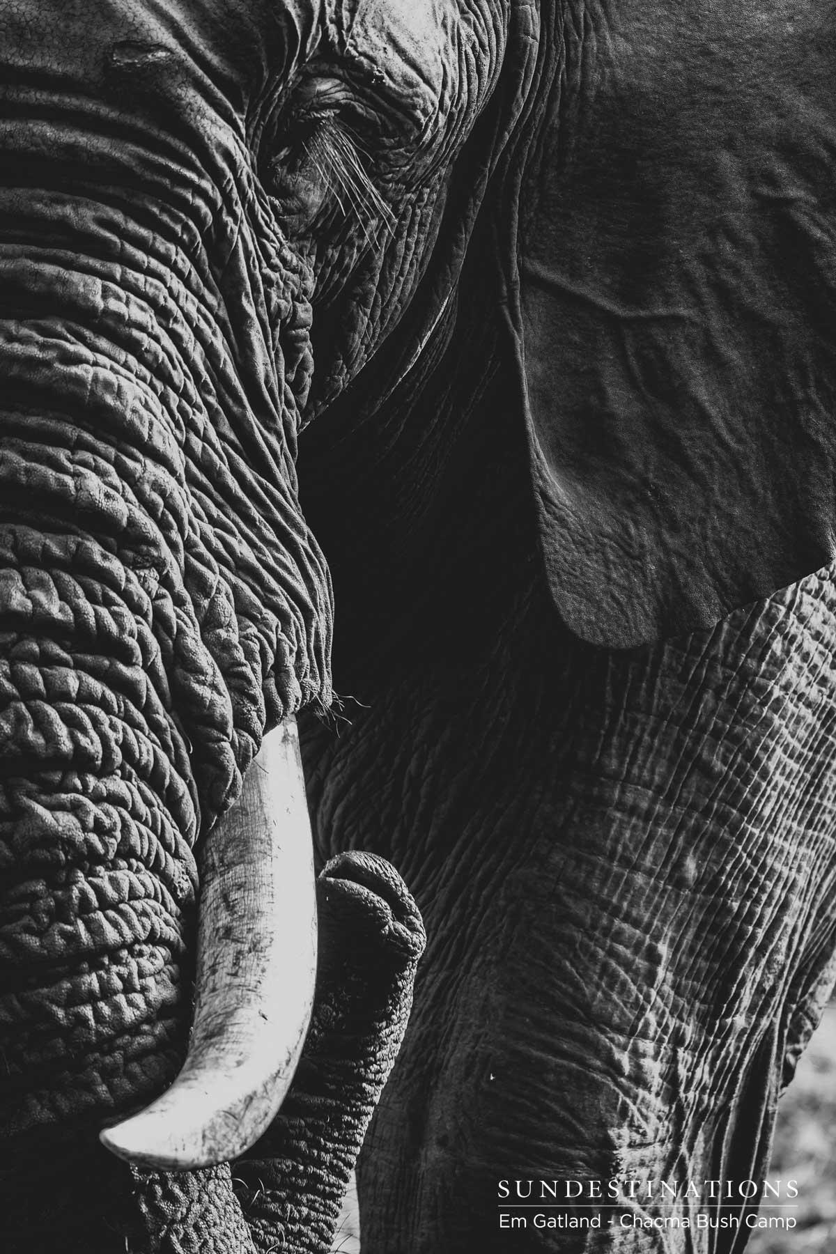 Elephants at Chacma Bush Camp