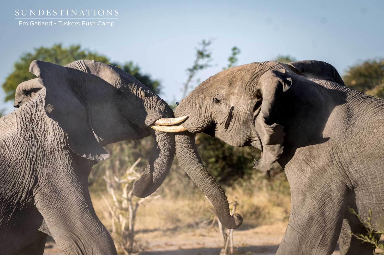 Elephants at Tuskers Bush Camp in Kwatale
