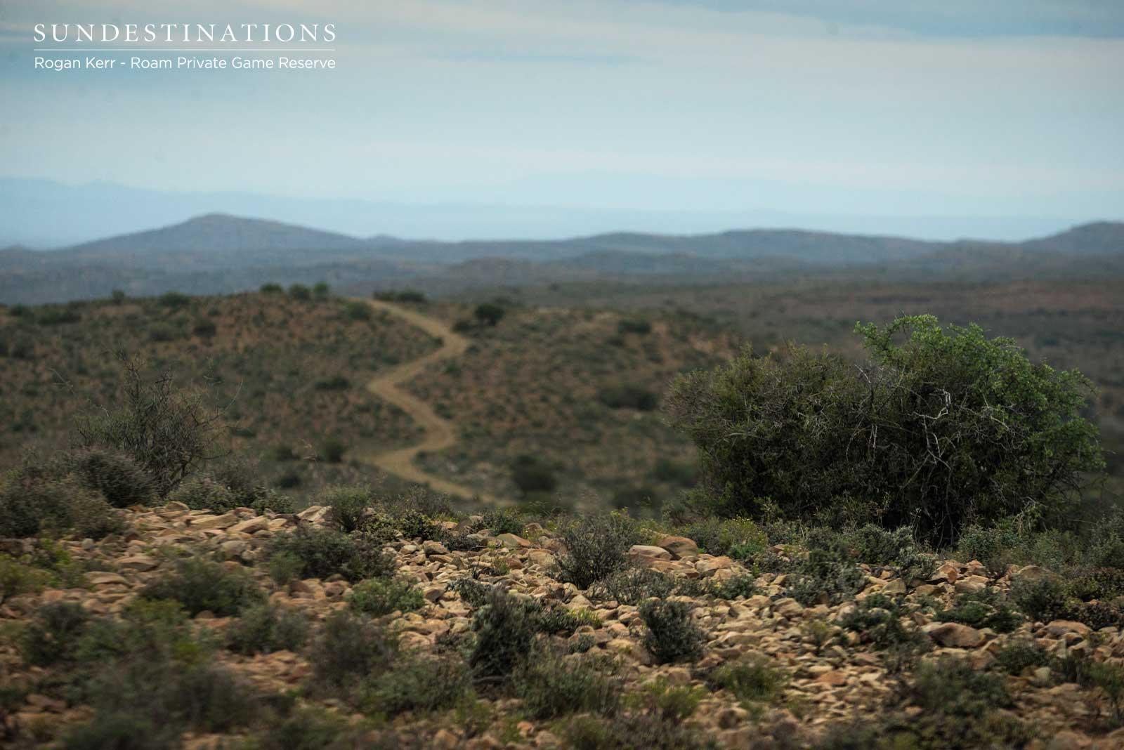 Roam Private Game Reserve Karoo Landscape