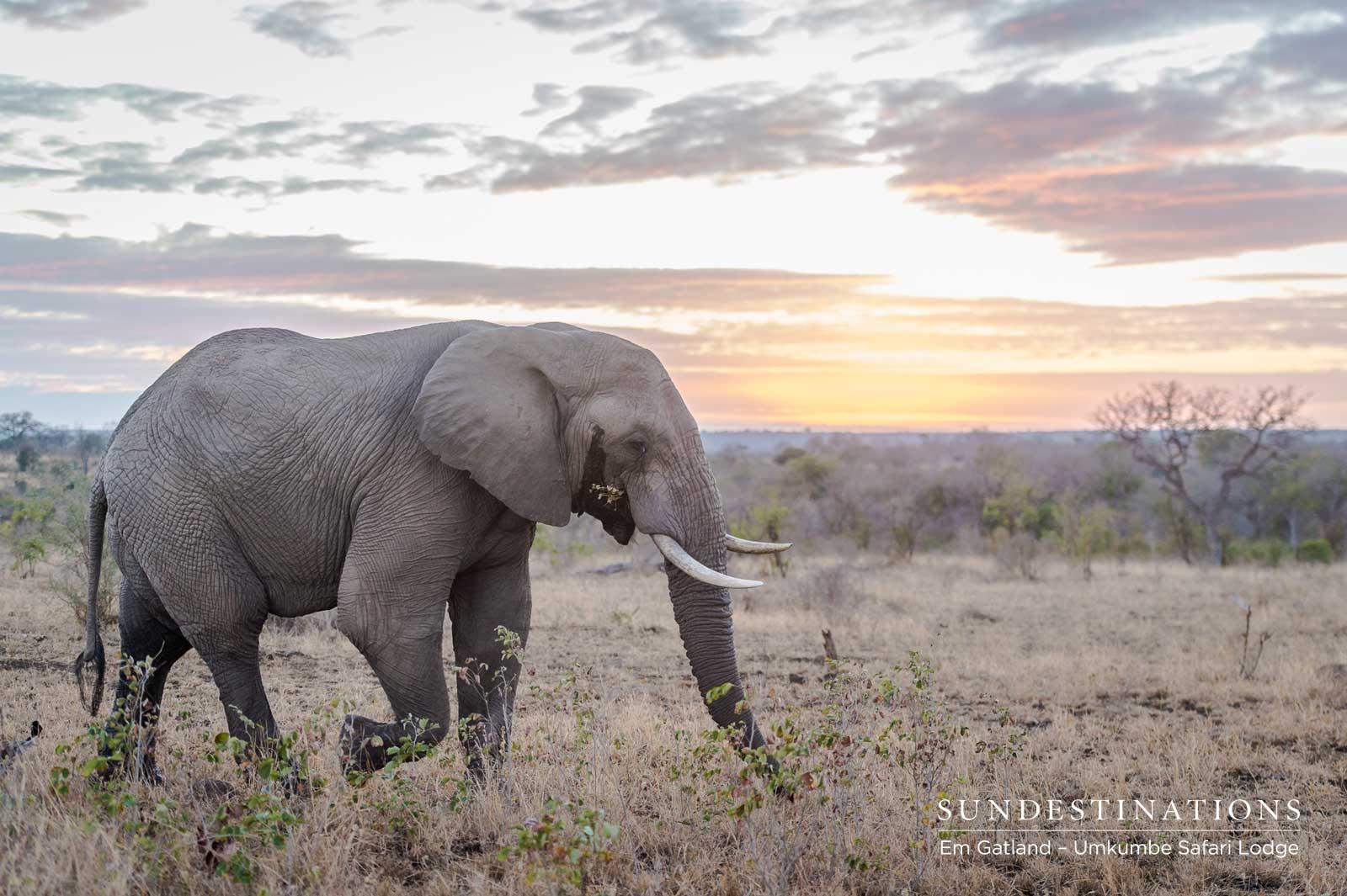 Umkumbe Elephants