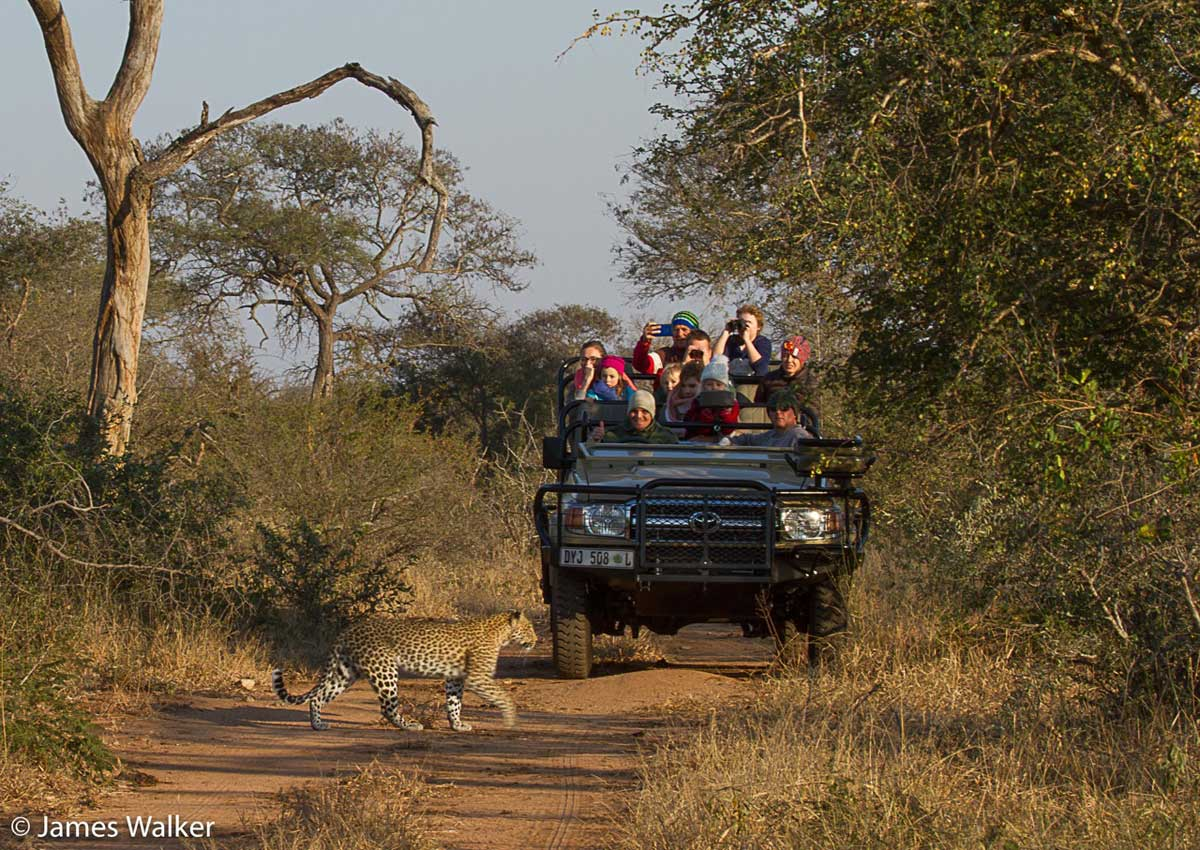 Walkers Bush Villa Leopards on Game Drive