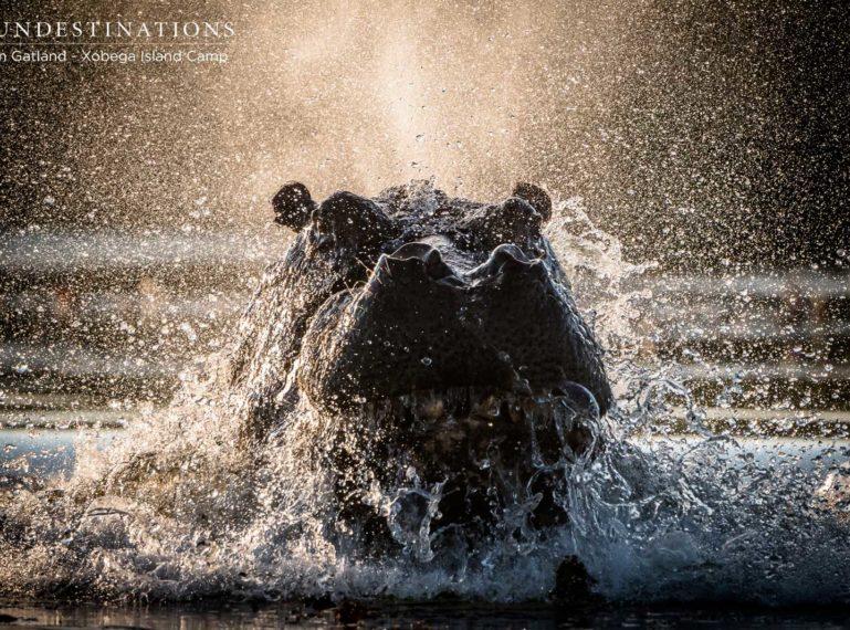 Listen to the Wild Beats of the Okavango Delta