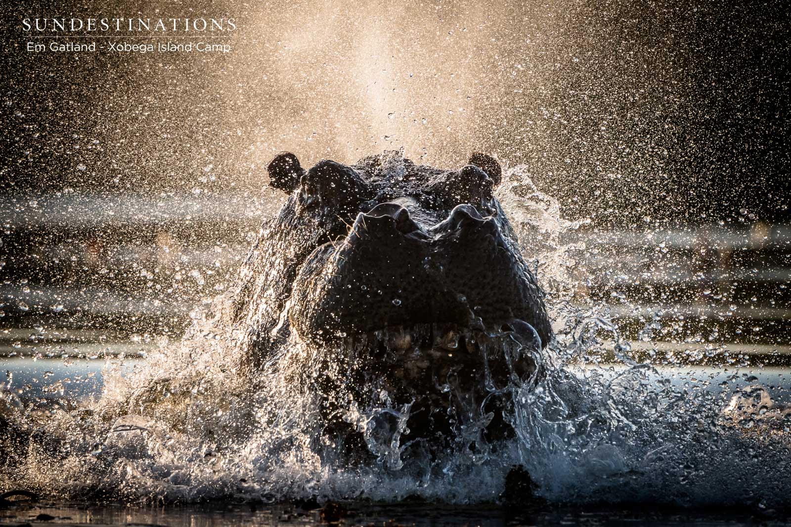 Xobega Hippo Water
