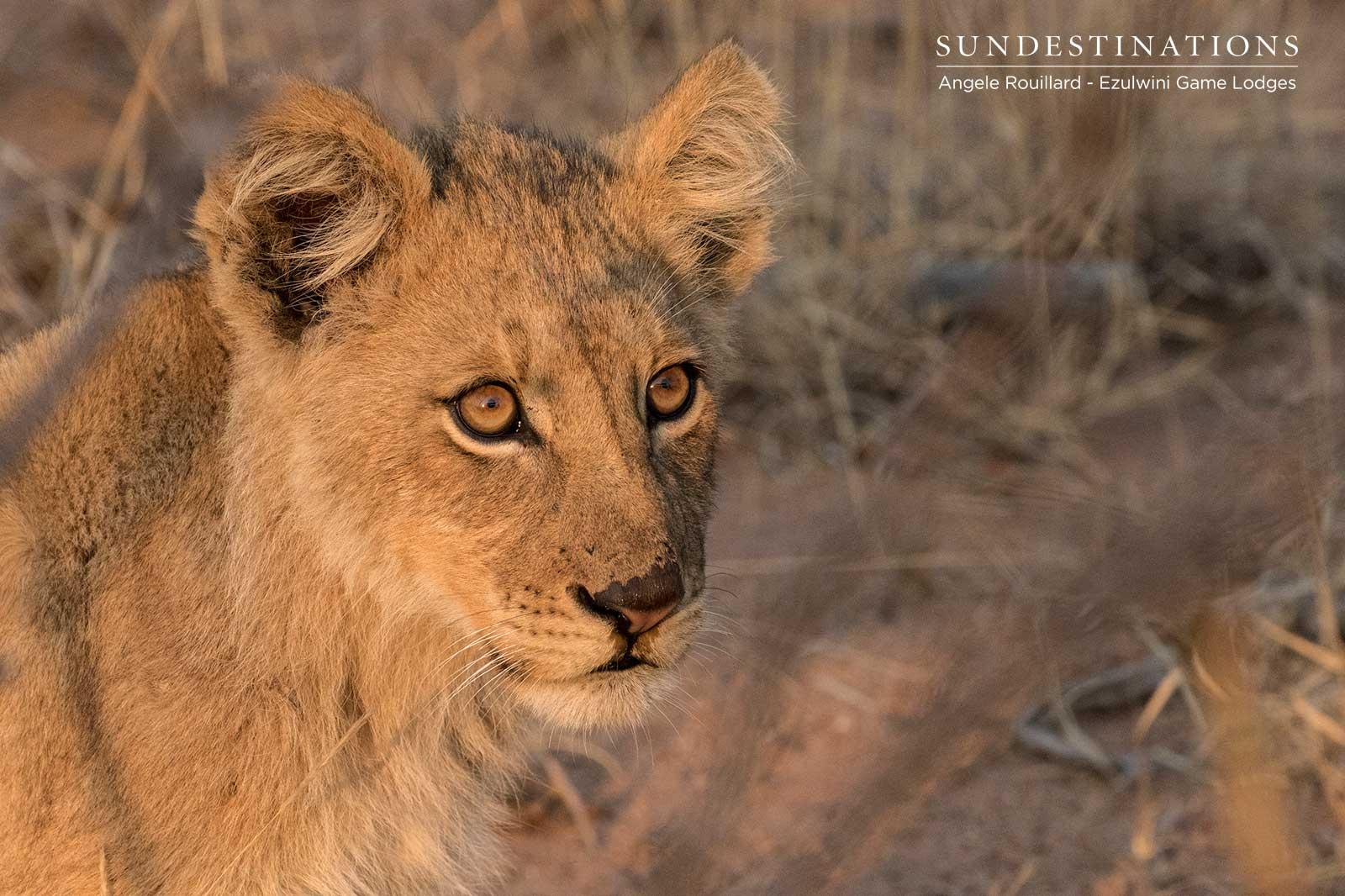 Kudyela Lion Cubs