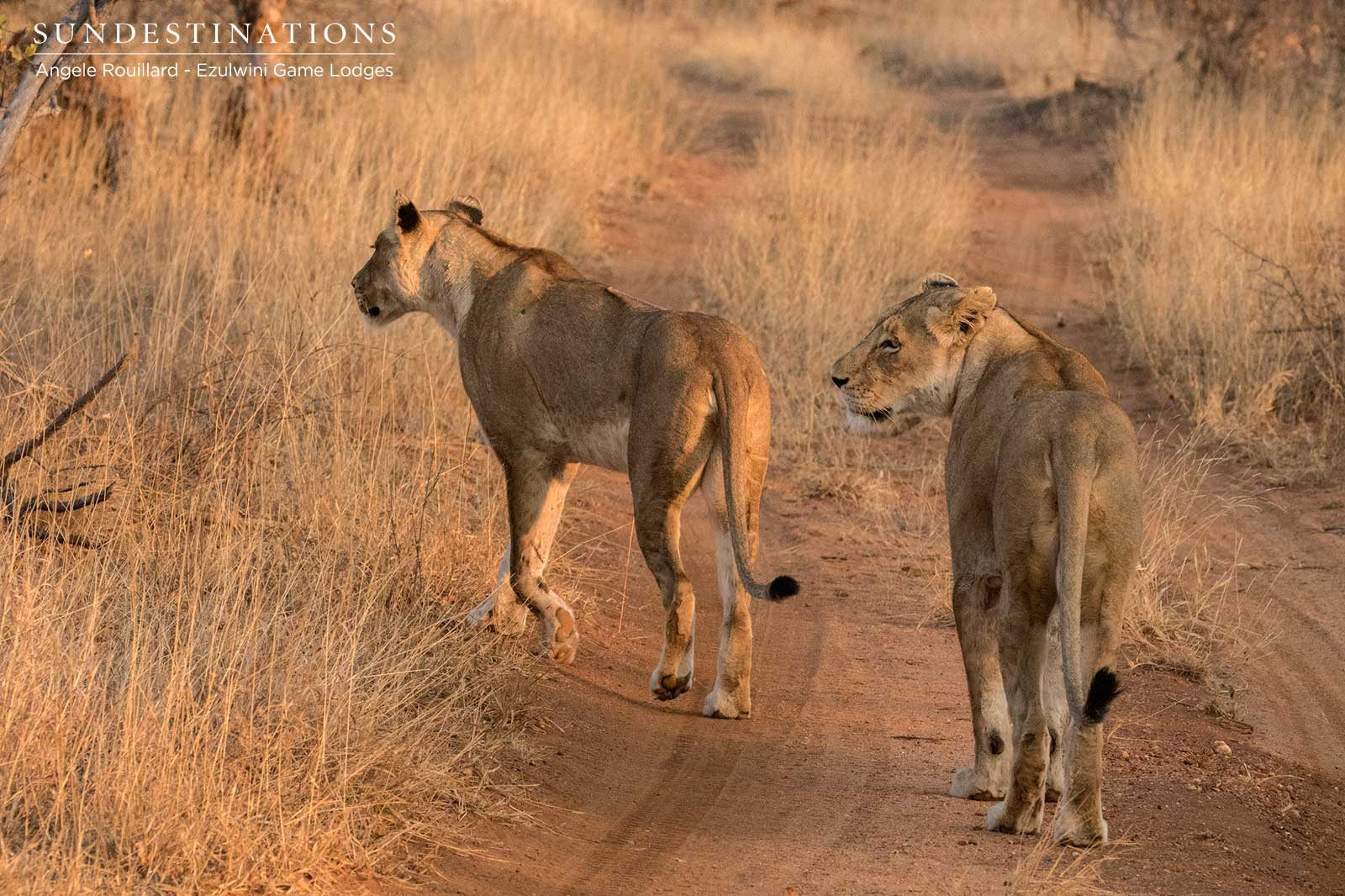 Kudyela Lionesses