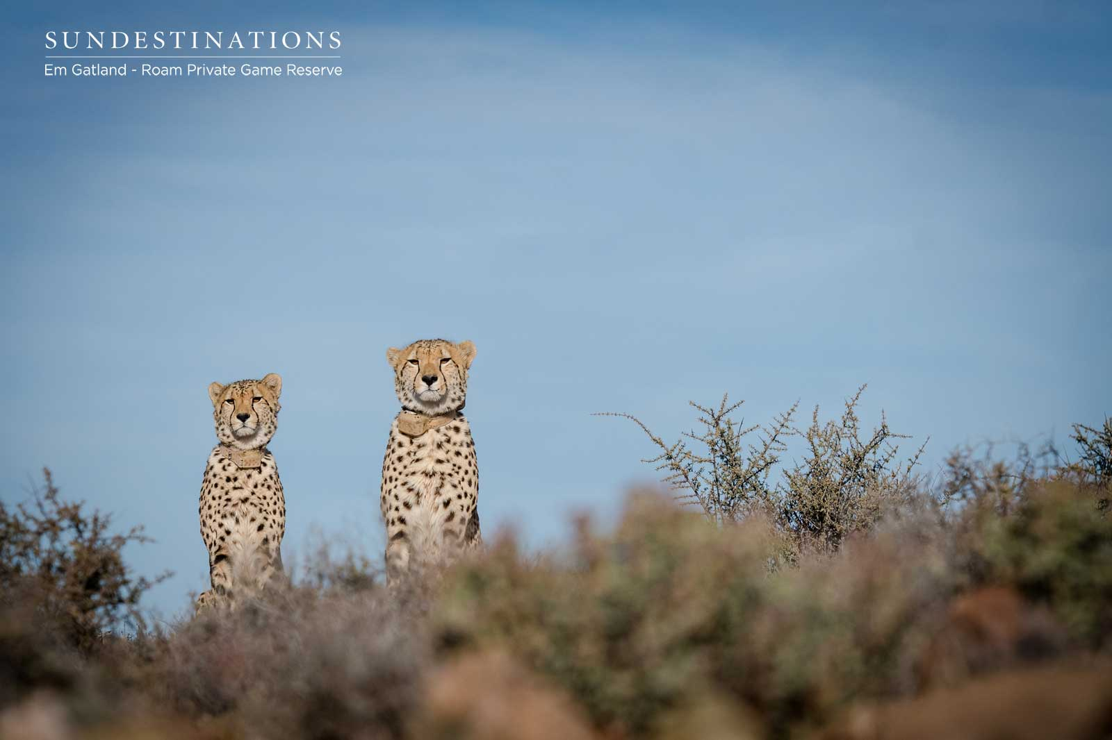 Spending Time with the Cheetah of Roam Private Game Reserve