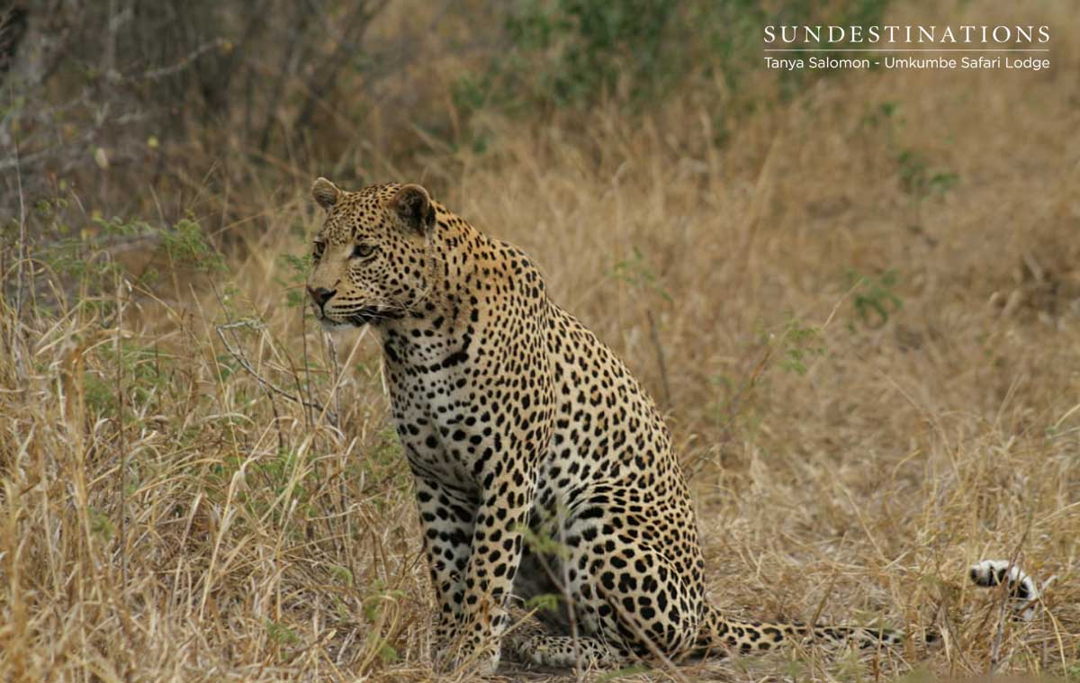 Leopards of Umkumbe