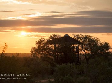 There's a beautiful ebb and flow of sightings in the bushveld. Sometimes it's a week of plains game sightings peppered with predator sightings, and other weeks its predators barging into the limelight and plains game taking a back sight. A few things are always consistent in the 'veld, and that includes mind-blowing sunsets, spectacular safari […]