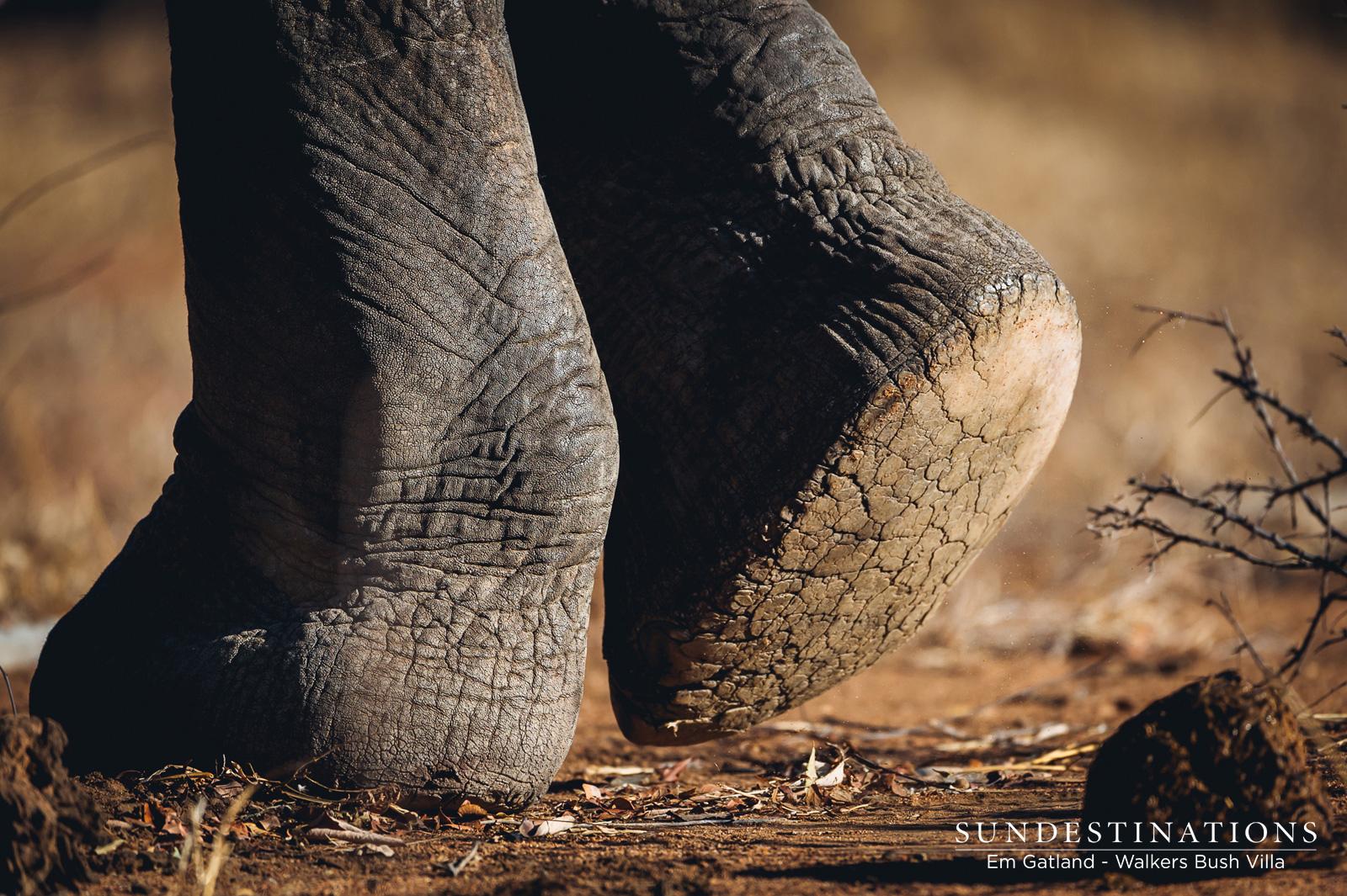 Elephant at Walkers Bush Villa