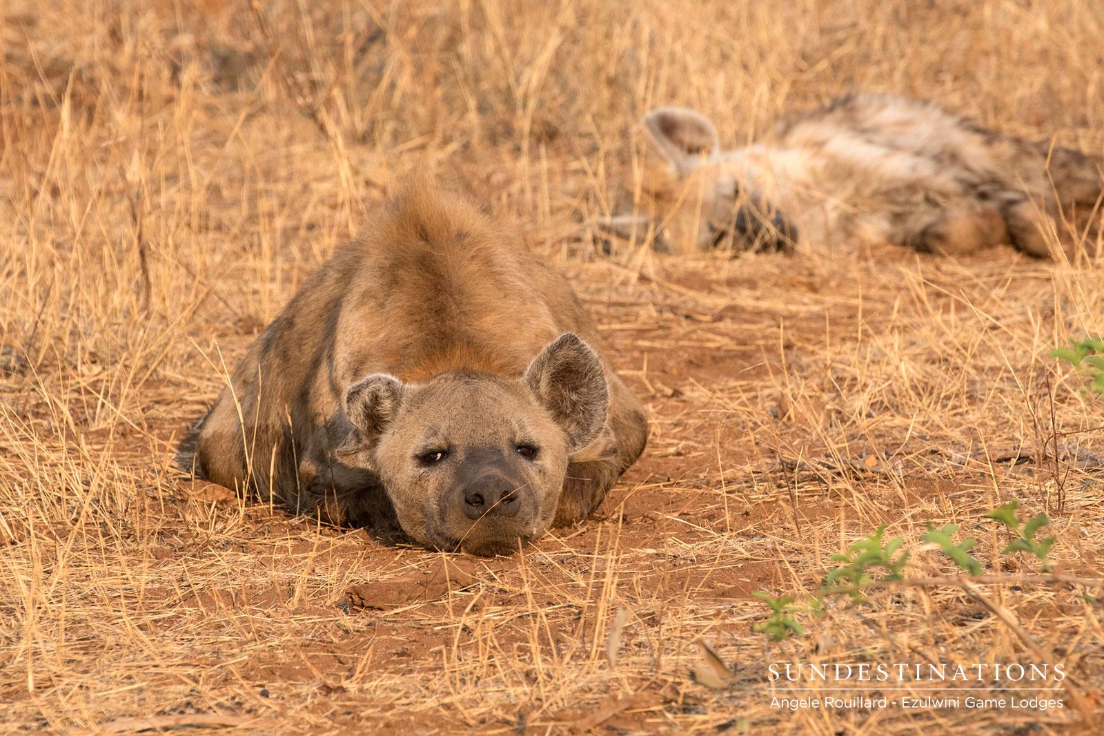 Hyena Ezulwini Game Lodges