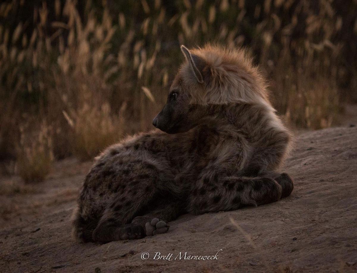 Hyena Nsala Safari Camp