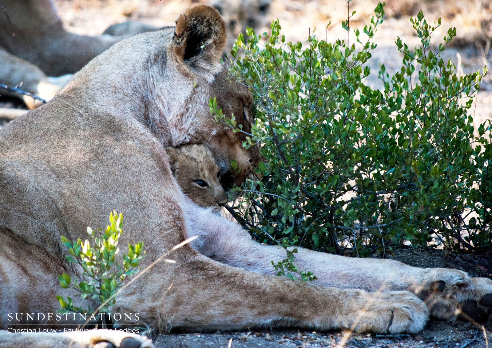 Mother and Cub at Ezulwini