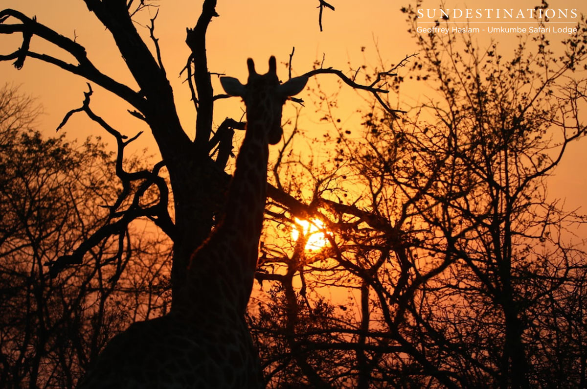Sunsets at Umkumbe Safari Lodge