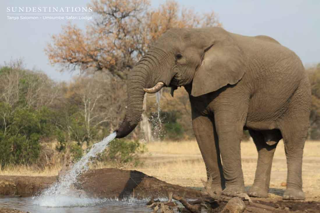 Elephants at Umkumbe