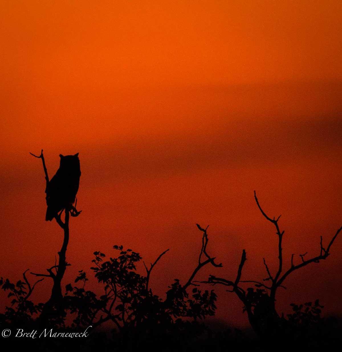 Sunset at Nsala Safari Camp