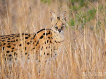 Last week we delivered a magnificent edition of Week in Pictures, filled to the brim with a fine collection of Kruger wildlife images. Accompanying the images was a rather detailed update from each of our camps. Today we're going to focus on the images, and less so on the words. It seems that our big […]