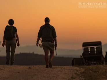 A walking safari in the wilds of the Greater Kruger is as exhilarating as it is meditative. Here are five reasons to sign up for a Kruger walking safari, pronto. 1) On foot encounters Seeing elephant, lion, rhino or buffalo from the safety of a game viewer is one thing; encountering any member of the […]