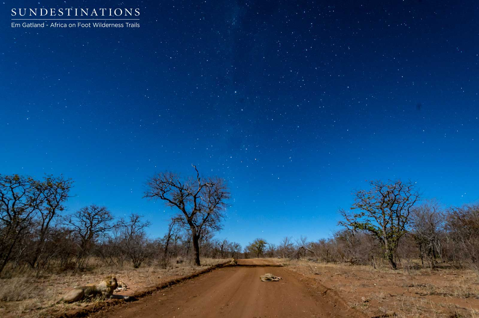 Wilderness Trails Stars