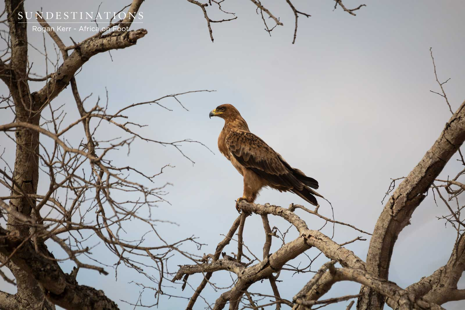 Tawny Eagle Klaserie