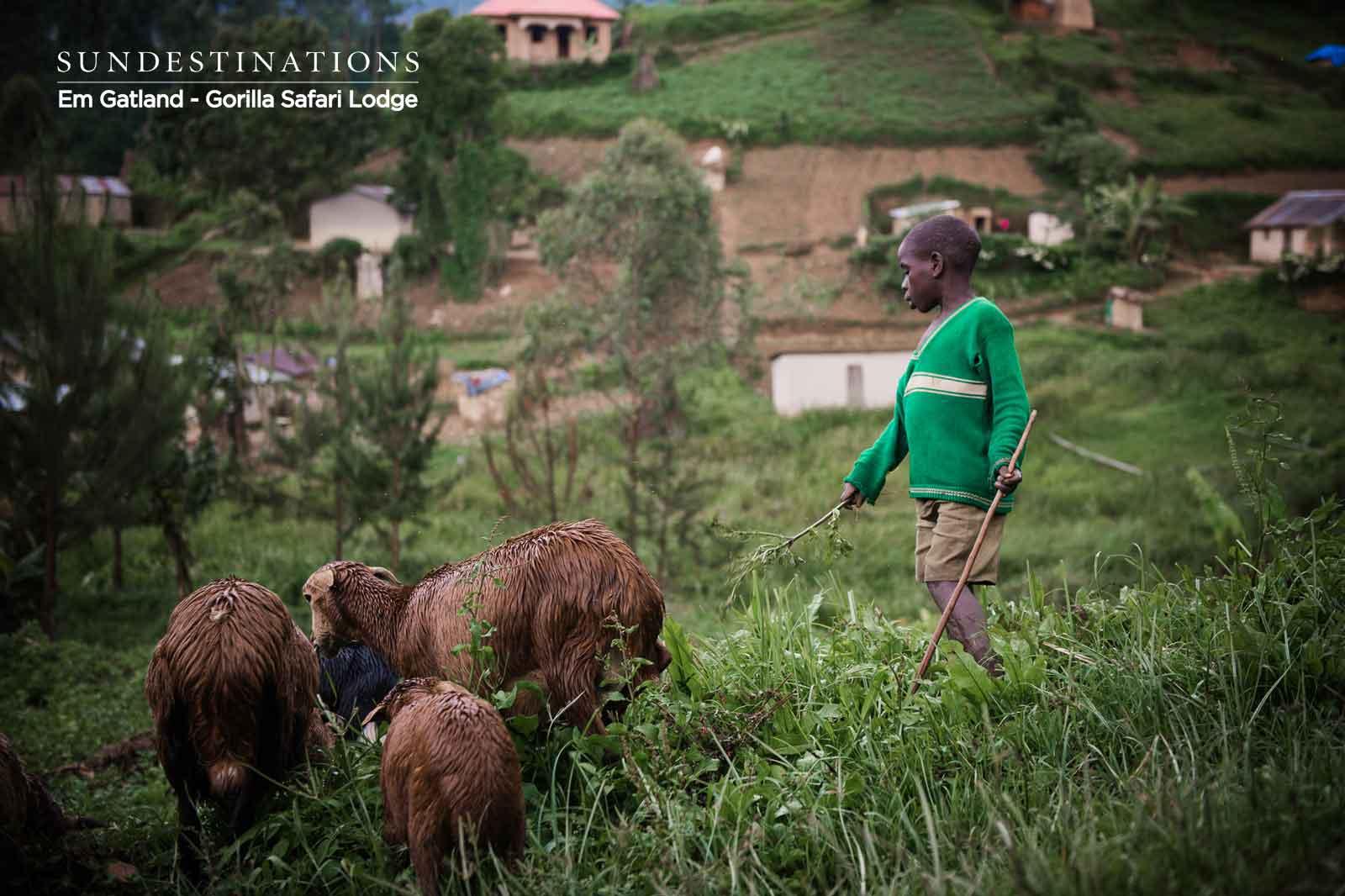 Batwa Herding Goats