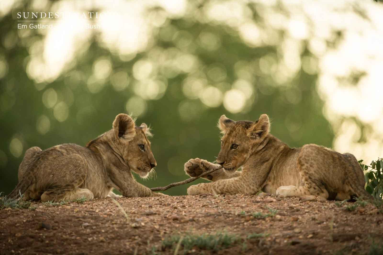 Lion Cub Coalition