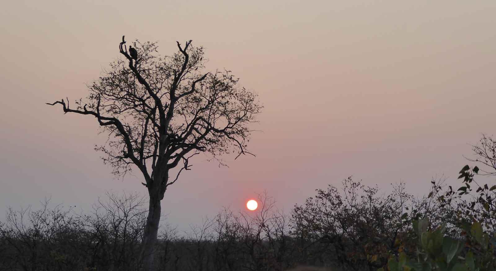 #GuestSafariReview : Nsala Safari Camp a Firm Favourite
