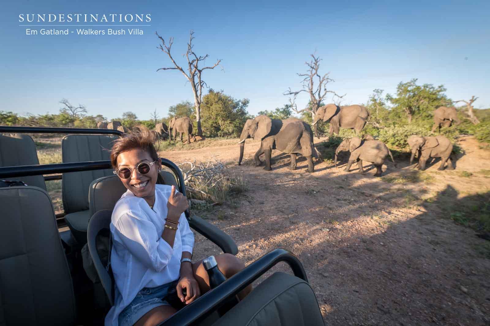 Timbavati Elephant Herds