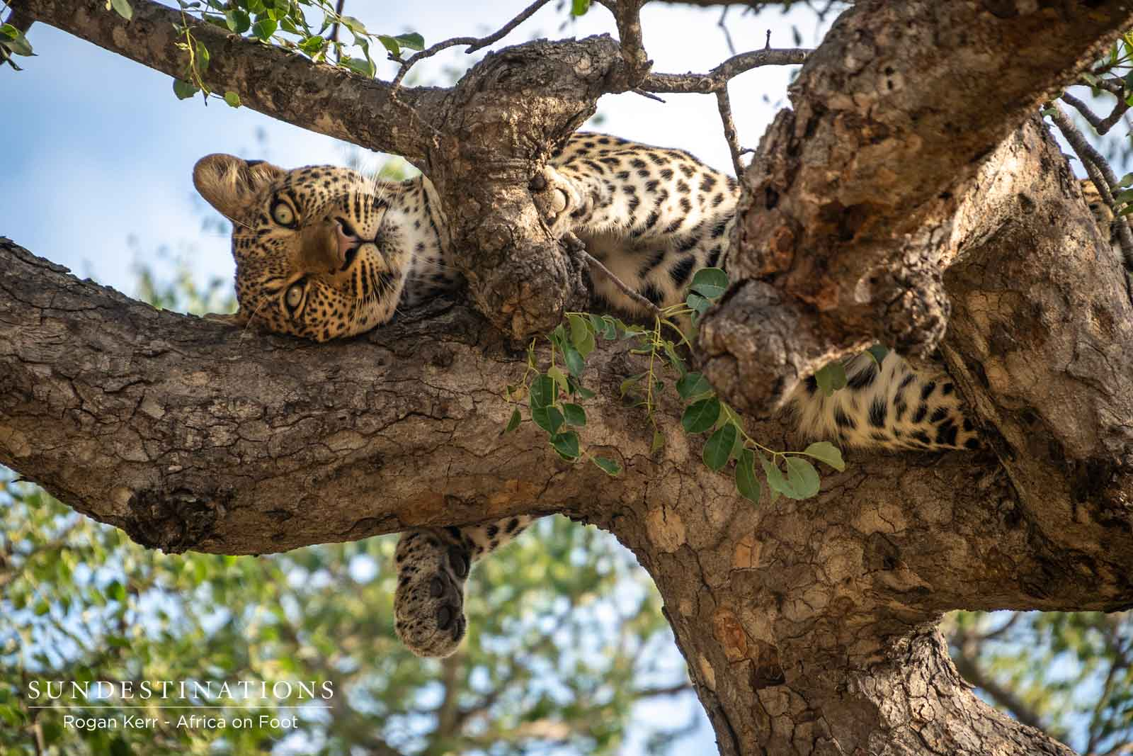 The Week in Pictures : Avian Delights, Big Cat Carnivals, and Lush Landscapes
