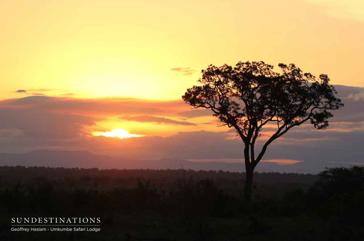 Sunset Over Sabi Sand