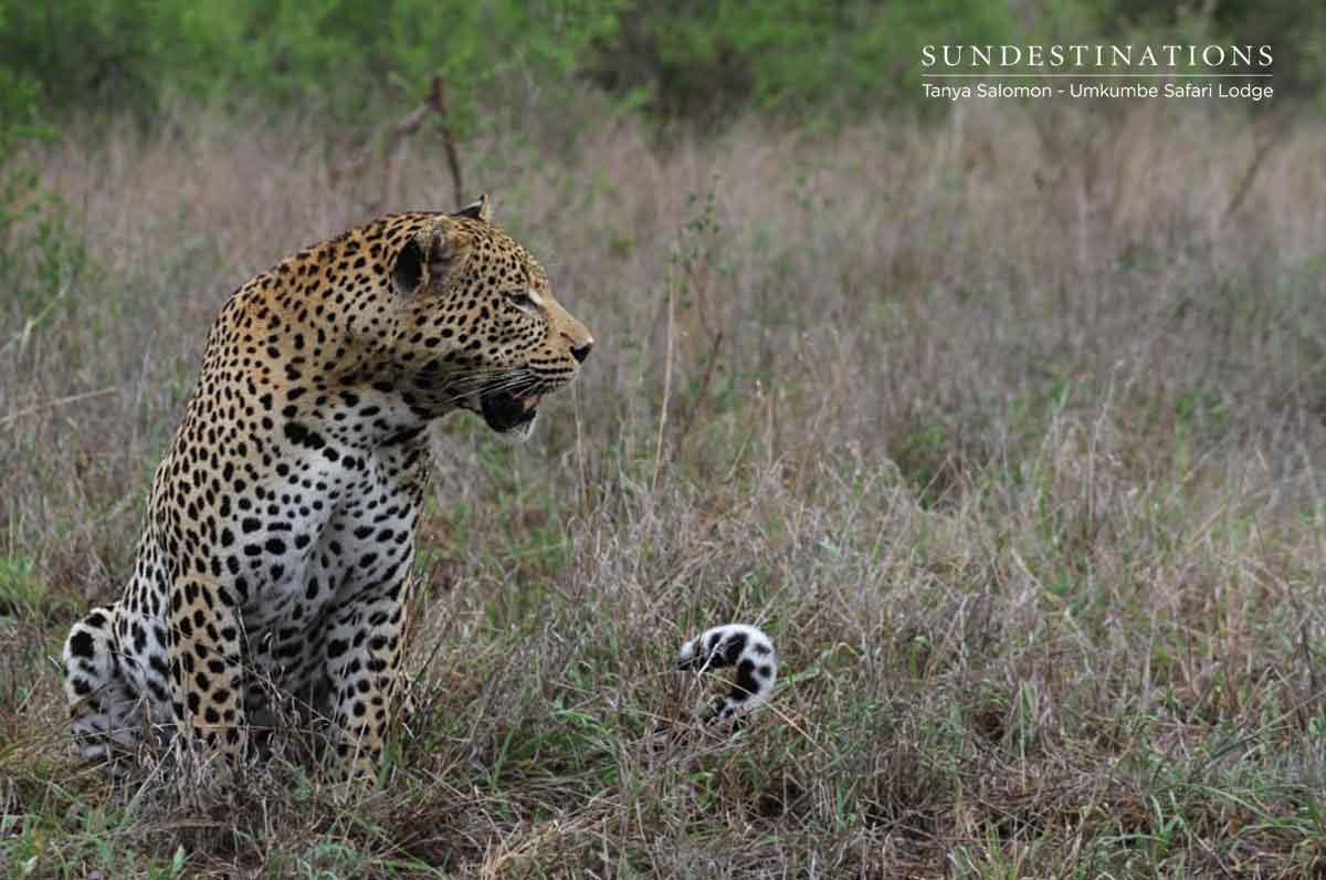 Umkumbe Leopards