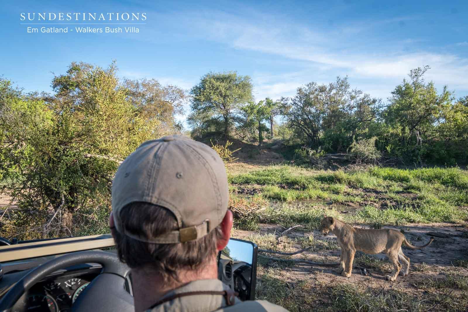 Walkers Bush Villa Spotting Lions