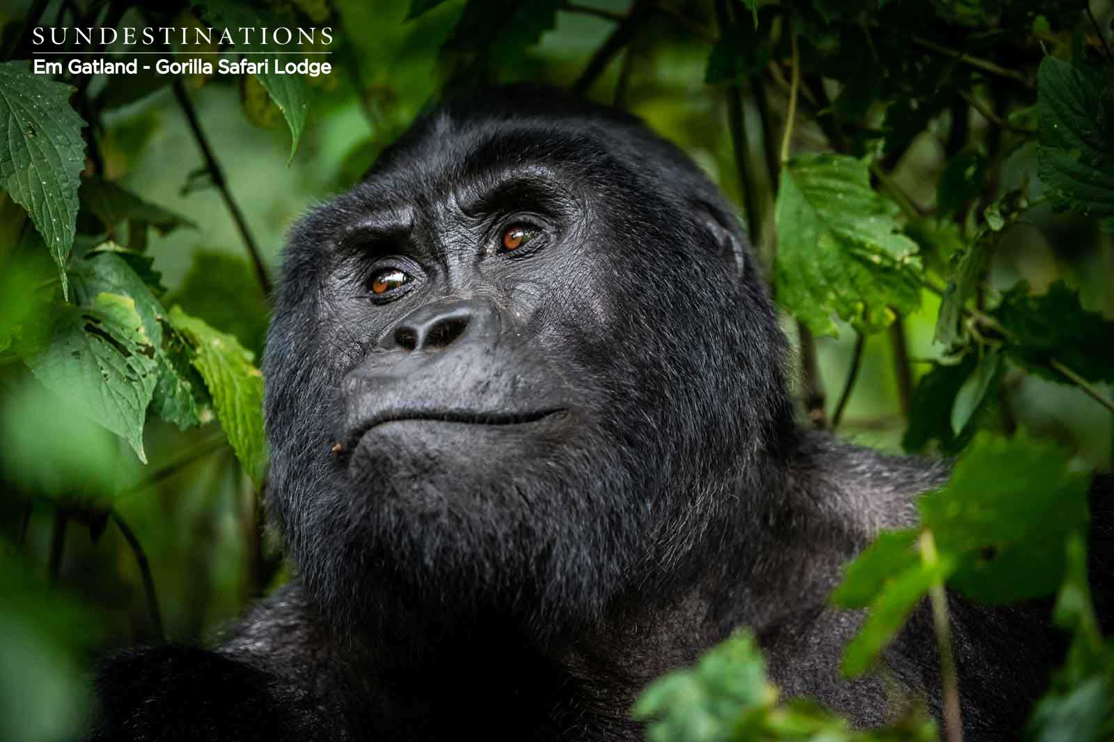 Trails of Uganda : Gorilla and Chimp Trekking Itineraries