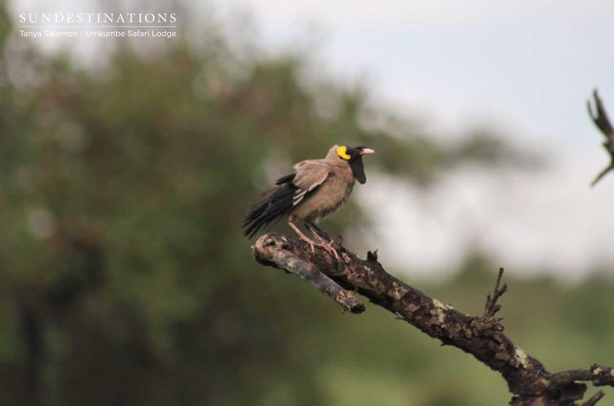 Umkumbe Birding
