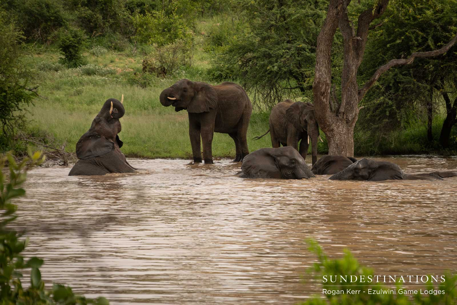 Ezulwini Elephants