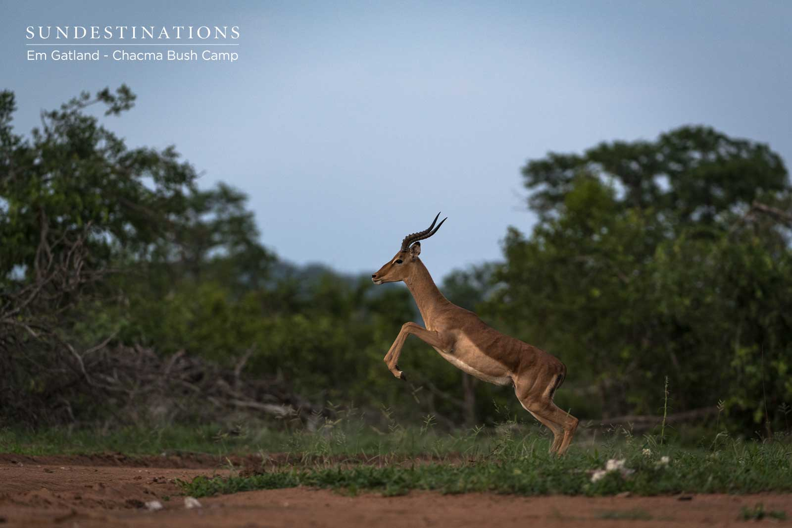 Springbok Jumps