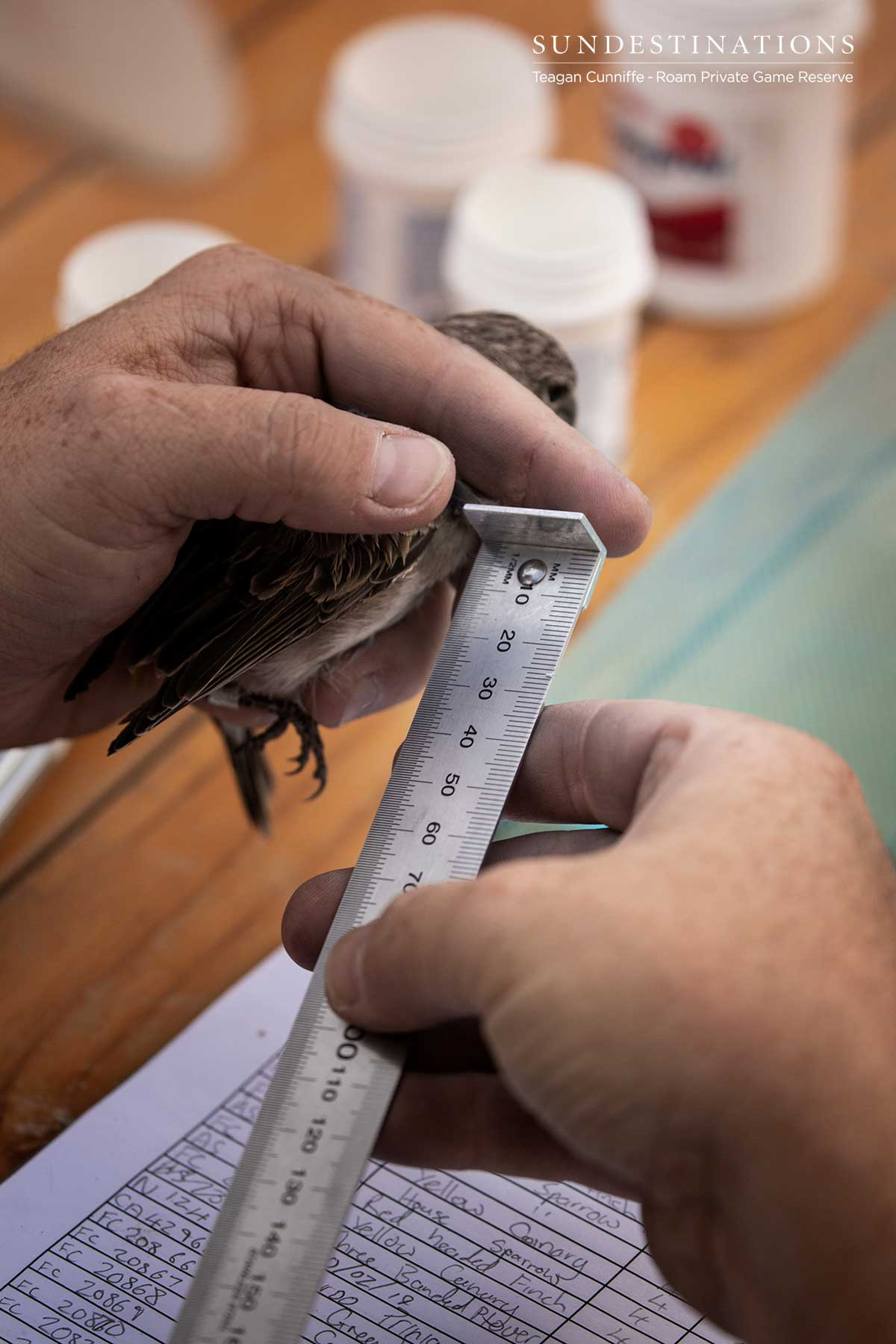 Measuring Birds