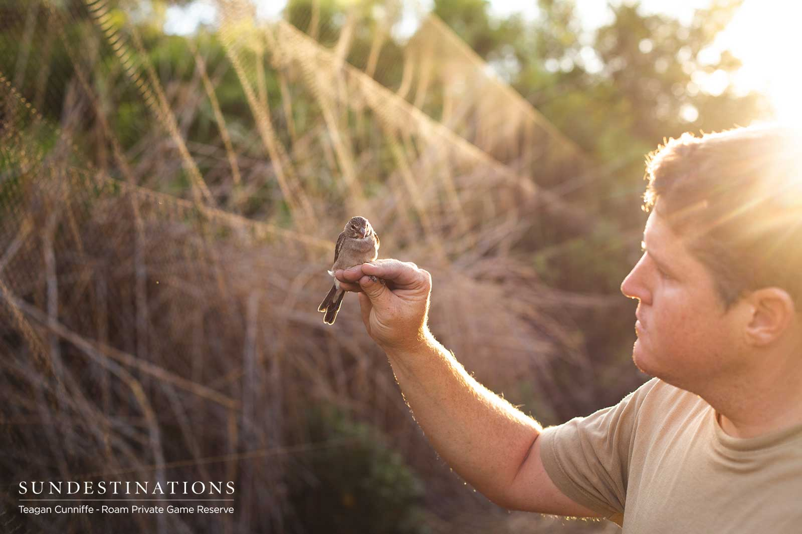 Bird-ringing at Roam Private Game Reserve