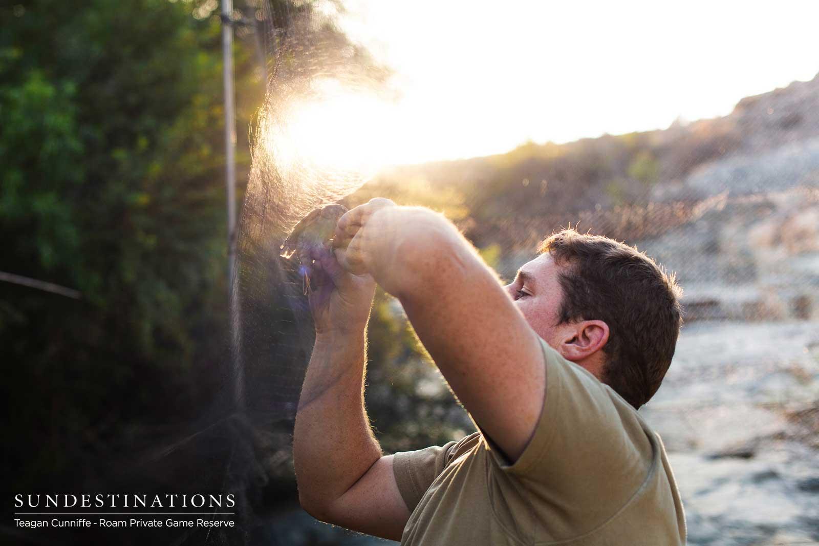 Bird Ringing Conservation in Great Karoo