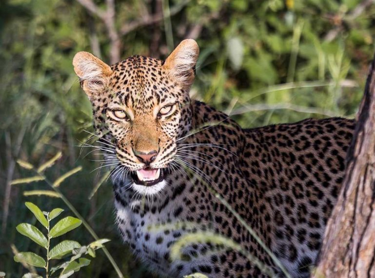 #GuestSafariReview : A Peek into a Safari at Africa on Foot