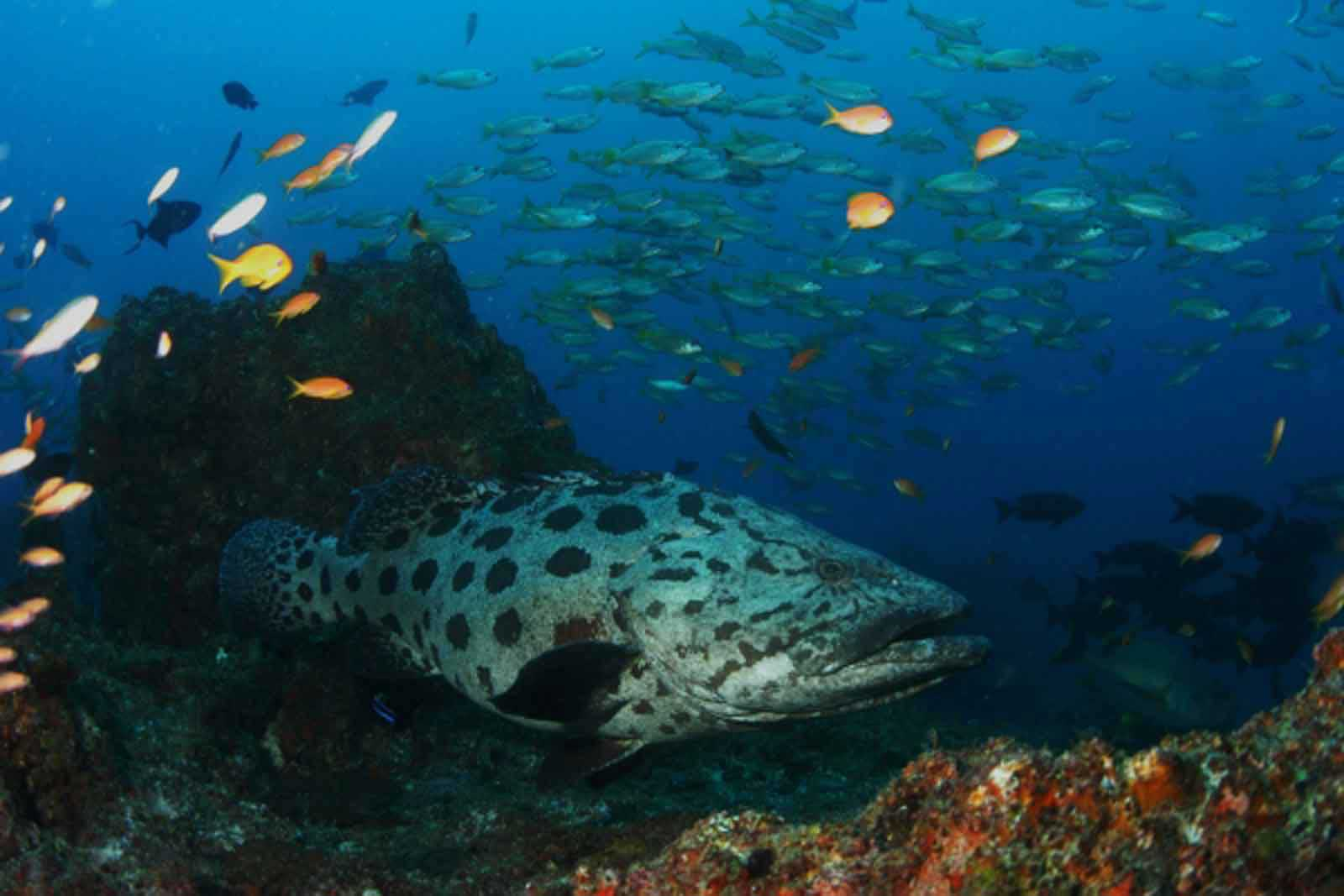 Scuba Diving in Mozambique : Plunge into Paradise