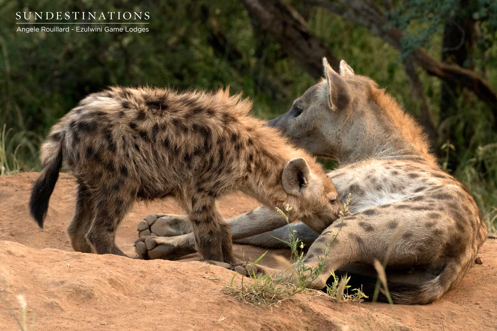 Hyena Cubs in the Balule
