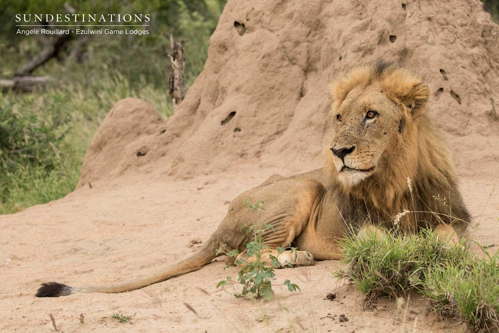Machaton Lions - Ezulwini