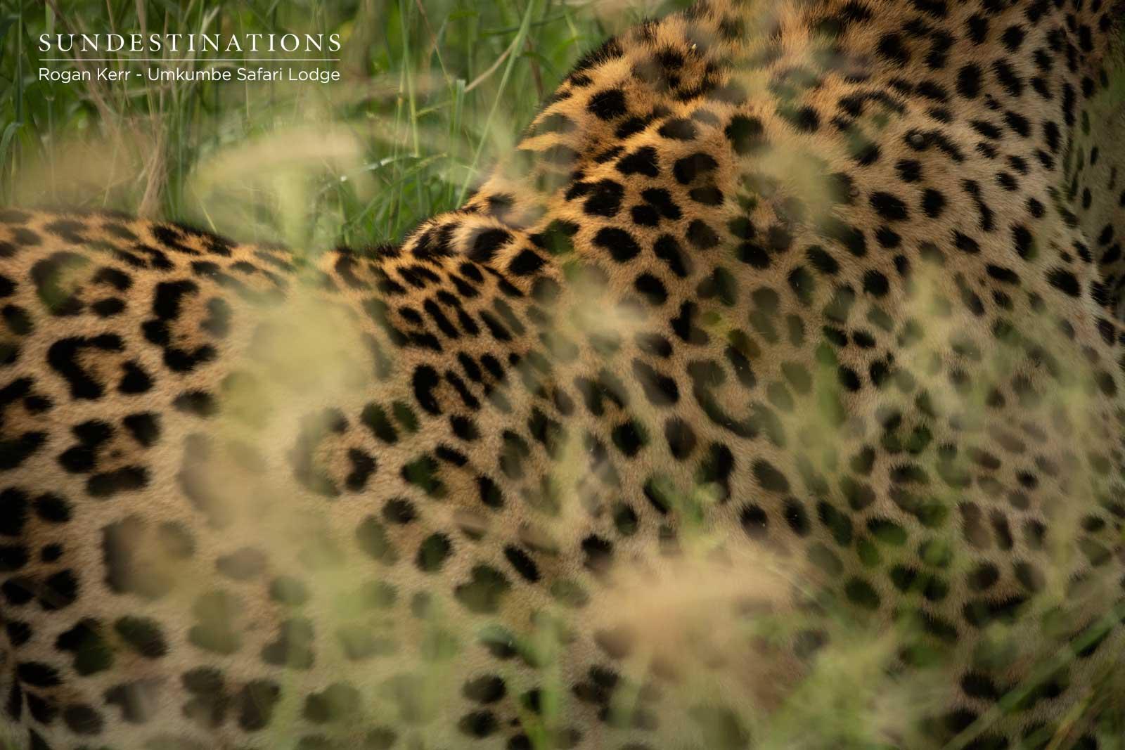 Leopard Patterns - Umkumbe
