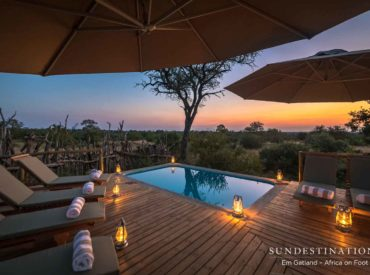 When the sizzling summer season is upon us and the African sun beats down on our lily white skin, we lap up the healthy dose of Vitamin D with glee. Summer has a vibe and it's evident in the bushveld. The Kruger can get sweltering hot and escaping the heat is paramount to feeling comfortable […]