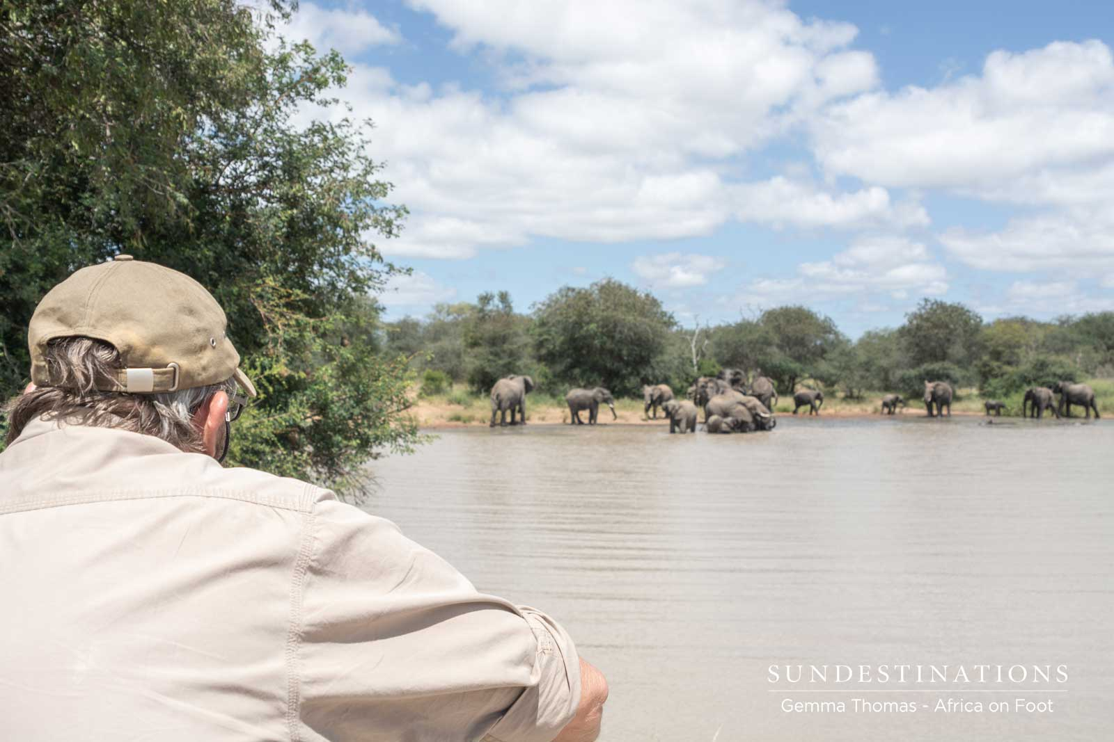 Elephants at Africa on Foot Waterhole