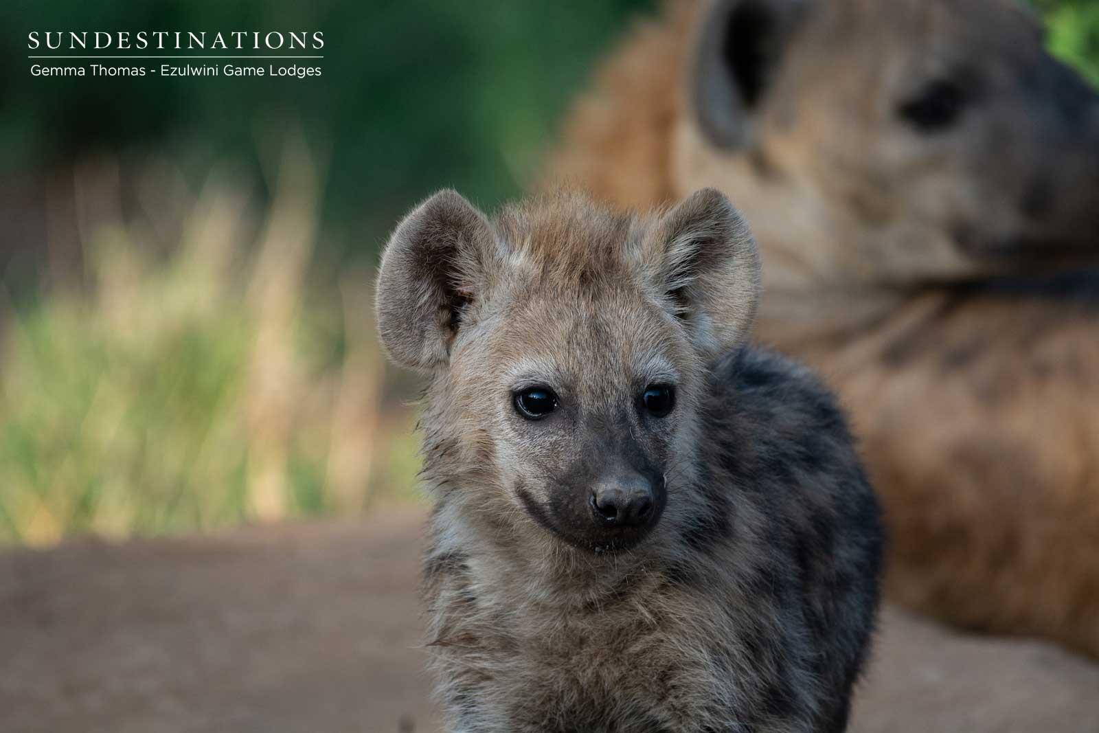 Hyena at Ezulwini