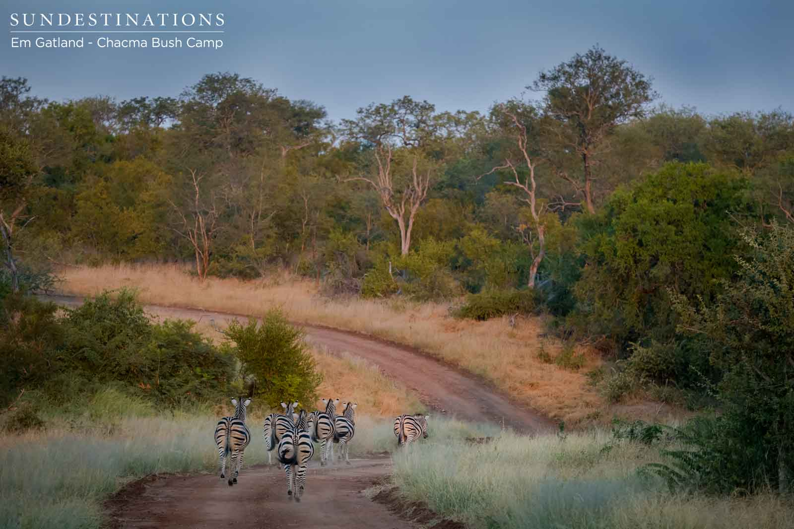 Zebra at Chacma Bush Camp